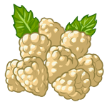 White Raspberries