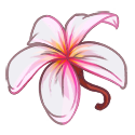 Ziksang Flower