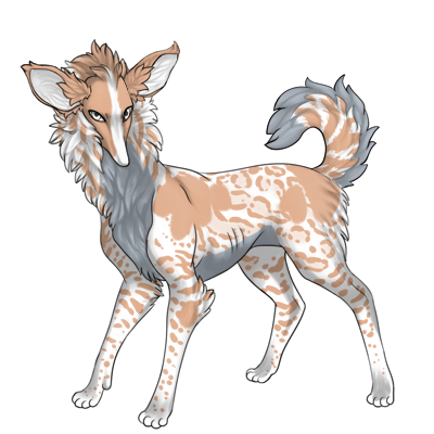 Preat with large ears and tail fluffy and curled towards back. White base and tan markings on top with gray belly.