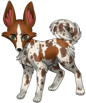 White Zorvic with redish brown patches and brown merle markings.